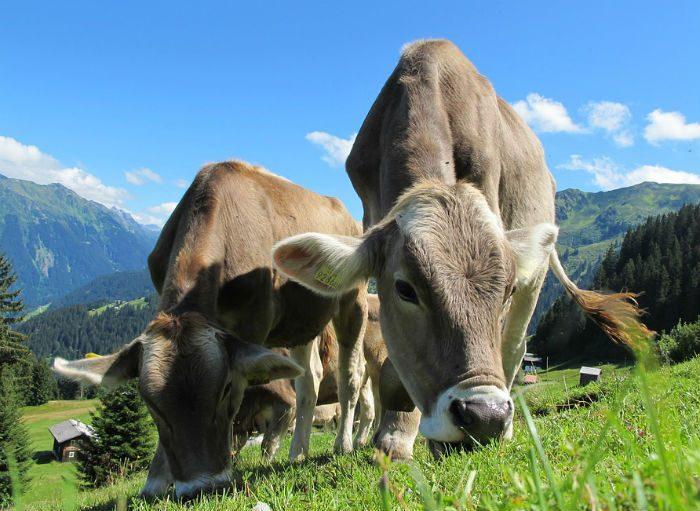 A pecuária extensiva é uma das características da produção orgânica.